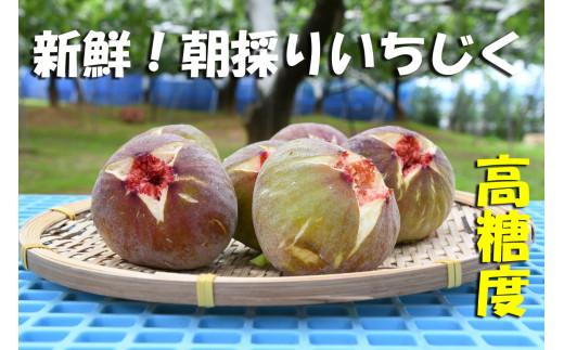CP-007 新鮮朝採りいちじく1.5kg【高糖度・ハウス栽培】
