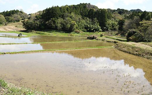 飲料水としても利用されている嶺岡山系からの湧き水で育てられました。