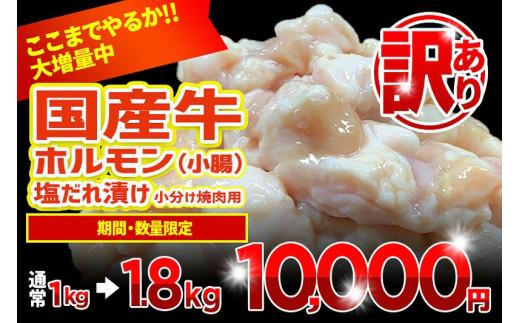 010B545 【期間限定】国産牛ホルモン(小腸)塩だれ漬け 小分け焼肉用 1.8kg(+800g)訳あり 数量限定