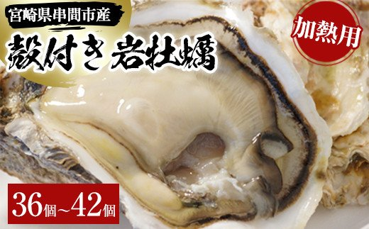 L-E2 <数量限定>串間市産!殻付岩牡蠣(加熱用・36~42個)濃厚でクリーミーな味わいを【串間市漁業協同組合】【L-E2】