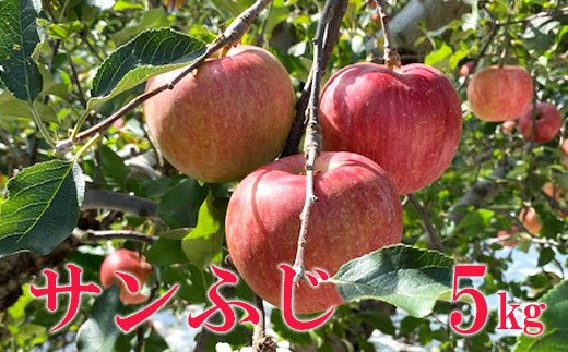 No.1123 先行予約 シャキッと爽快、太陽をたっぷり浴びた林檎  りんご サンふじ(蜜入り) 5kg(12玉~20玉)
