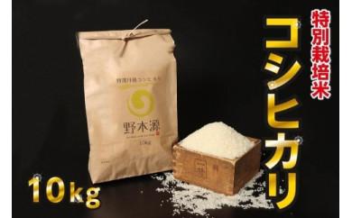 京丹後米 特別栽培米コシヒカリ10kg/令和3年度産 精米 白米 お米