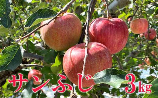 No.1122 先行予約 シャキッと爽快、太陽をたっぷり浴びた林檎  りんご サンふじ(蜜入り) 3kg(8玉~9玉)