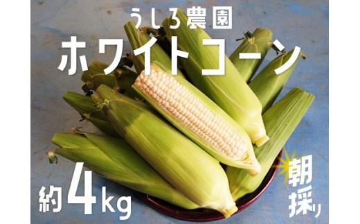 FX05:この美味しさにハマる!!朝採りホワイトコーン 4kg