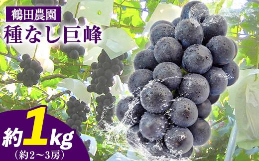 鶴田農園の種なし巨峰 約1kg(2~3房)《8月中旬-9月下旬頃より順次出荷》熊本県荒尾市