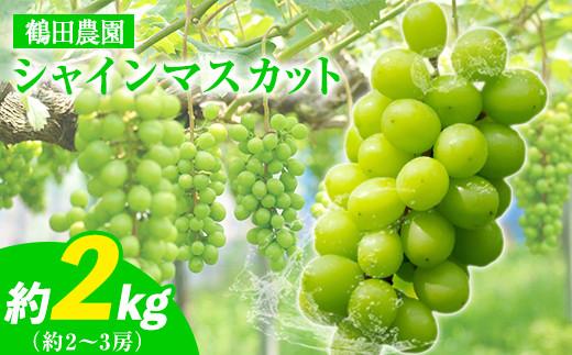 鶴田農園のシャインマスカット 約2kg (2~3房)《8月中旬-9月下旬頃より順次出荷》熊本県荒尾市