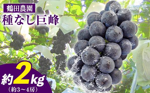 鶴田農園の種なし巨峰 約2kg(3~4房)《8月中旬-9月下旬頃より順次出荷》熊本県荒尾市