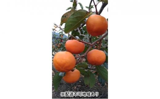 [№5656-1651]【杷木の柿】富有 柿(冷蔵)約3kg(約14玉)※配送不可:離島