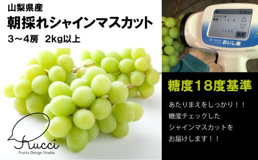 【糖度18度基準】シャインマスカット2.0㎏【朝採れ】