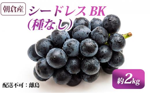 [№5656-1620]朝倉産 シードレス BK(種なし)約2kg【配送不可:離島】