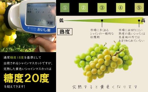 糖度18度前後を基準として収穫されるシャインマスカットですが、一般的にはカラーチャート③の色を目安に収穫されます。