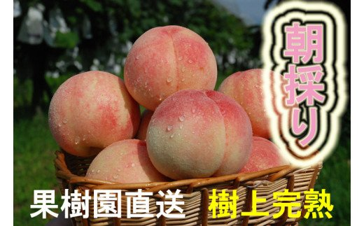 BQ-028 果樹園直送/行橋市特産/朝採り「白鳳のもも」2kg×2箱