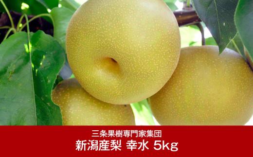 【016P019】[三条果樹専門家集団] 新潟フルーツ 新潟県産 和梨 幸水 5kg