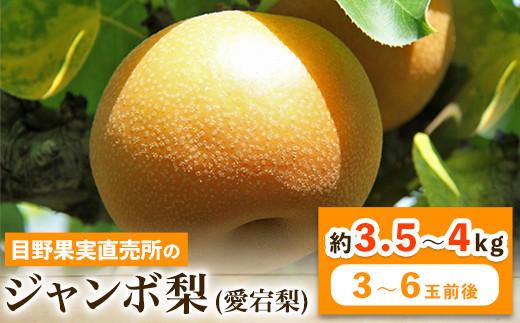 熊本県荒尾市産 目野果実直売所の愛宕梨 約3.5~4kg(3~6玉前後) 《12月中旬~3月中旬頃より順次出荷(土日祝除く)》なし フルーツ 果物 新鮮 常温便