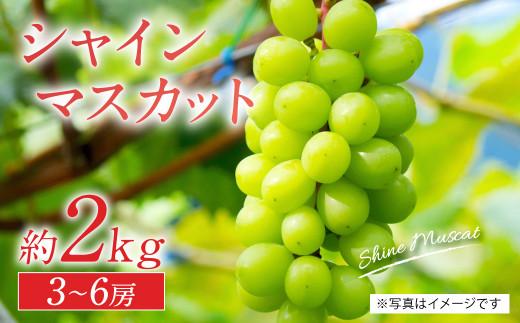 【先行予約】【2021年8月中旬より発送】熊本県産 シャインマスカット 約2㎏ 3房~6房