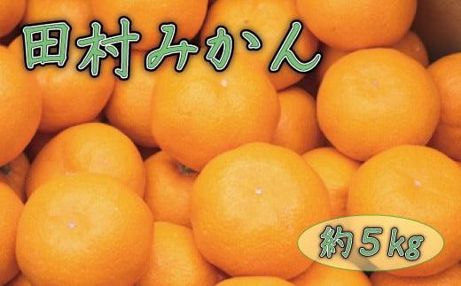 田村みかん約5kg