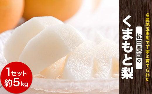 『松田農園』の玉東梨 (約5kg) 予約受付中《7月下旬-8月末頃より順次出荷》 熊本県 玉名郡 玉東町 梨 ナシ フルーツ 果物 送料無料 先行予約 旬