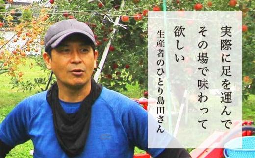 島田さんは、収穫の終わる12月から翌年に向けて剪定作業を始めます。りんごは他の果樹に比べ、手入れが大変で手間もかかるそうです。