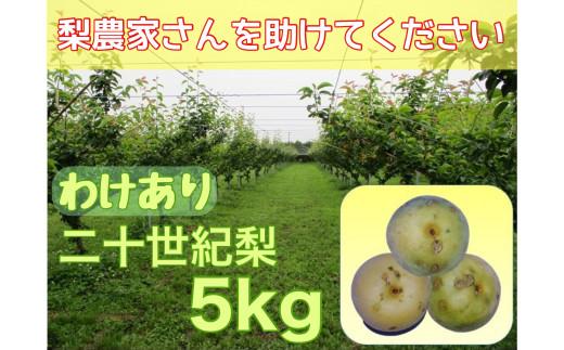 DS-22 【わけあり】「ひょう」の被害を受けても力強く育つ二十世紀梨(5kg)