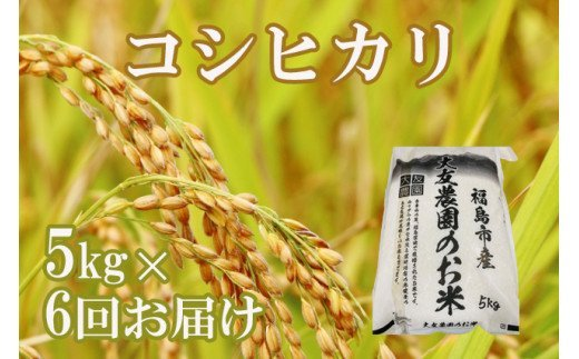 No.1200 お米定期便 コシヒカリ玄米 合計30kg(5kg×6回)
