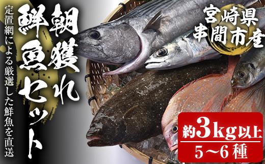 KU071 <先行予約・2021年11月上旬から発送開始>宮崎県串間産 朝獲れ鮮魚セット計約3~5kg(5~6種) 定置網による厳選「朝獲れ鮮魚」を漁師直送! 【豊漁丸】【KU071】