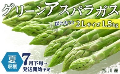 【先行予約】夏収穫グリーンアスパラ 2Lサイズ 1.5㎏(7月下旬~発送開始予定)