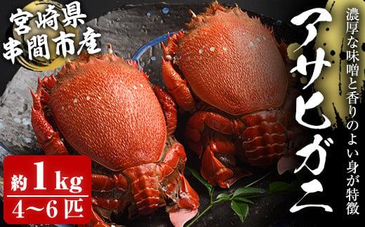 KU017 宮崎県串間産アサヒガニ(計約1kg・4~6匹)日本では大変希少な国産アサヒガニ !【豊漁丸】