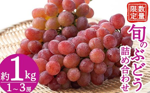 A-086 <先行予約受付中!2021年8月中旬~9月中旬の間に発送予定>旬のぶどう詰め合わせ1~3房(約1kg)シャインマスカット・瀬戸ジャイアンツ等の葡萄から一番旬のものをお届け【さくら農園】