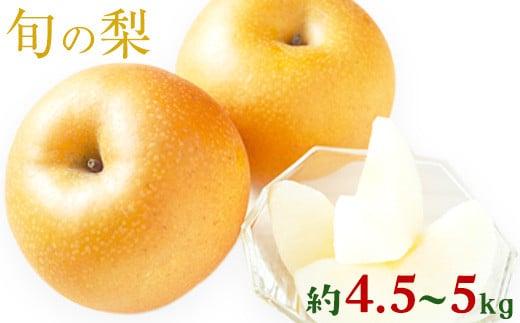 熊本県荒尾市産 フレッシュフーズ 旬の梨(幸水、豊水、あきづき、新高)約4.5kg-5kg(7-16玉)《7月中旬-11月上旬頃より順次出荷》なし フルーツ 果物 新鮮