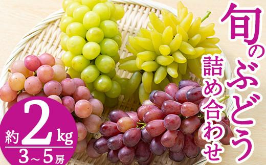 B-050 <先行予約受付中!2021年8月中旬~9月中旬の間に発送予定>旬のぶどう詰め合わせ3~5房(約2kg)シャインマスカット・瀬戸ジャイアンツ等の葡萄から一番旬のものをお届け【さくら農園】