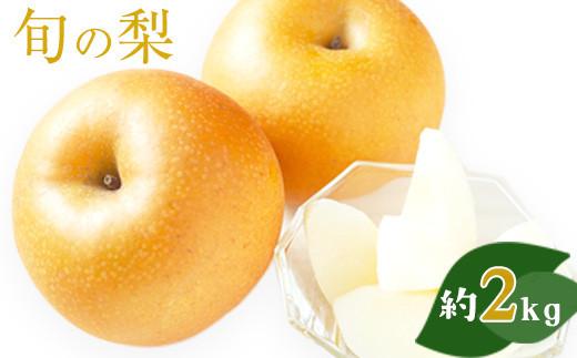 熊本県荒尾市産 フレッシュフーズ 旬の梨(幸水、豊水、あきづき、新高)約2kg(約2~6玉)《7月中旬-11月上旬頃より順次出荷》 なし フルーツ 果物 新鮮 クール便
