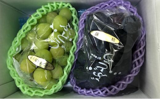 [№5722-0421]飯田葡萄園 シャインマスカットと選りすぐりぶどうの食べ比べセット 約1.2kg(2房)