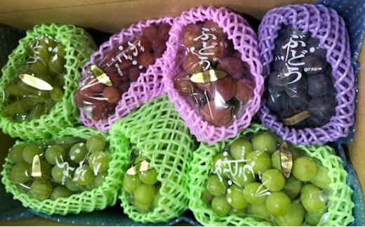 [№5722-0424]飯田葡萄園 シャインマスカットと選りすぐりぶどうの食べ比べセット 約3.6kg(6房~7房)