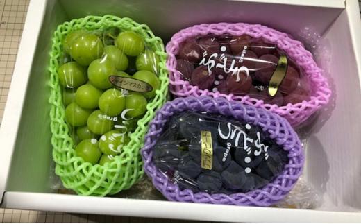 [№5722-0422]飯田葡萄園 シャインマスカットと選りすぐりぶどうの食べ比べセット 約1.8kg(3房)