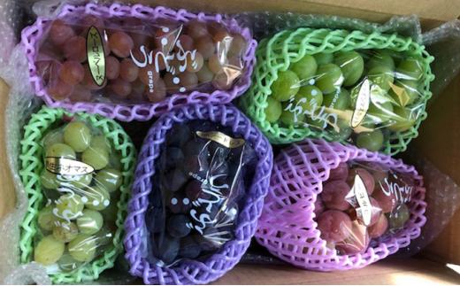 [№5722-0423]飯田葡萄園 シャインマスカットと選りすぐりぶどうの食べ比べセット 約2.4kg(4房~5房)