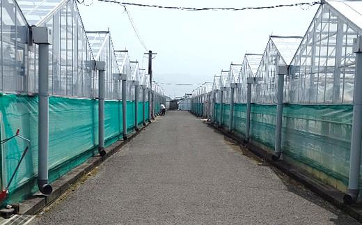 糖蜜還元農法で作った 熊本県 八代産 房付 トマト 計約3kg(250g×8P)