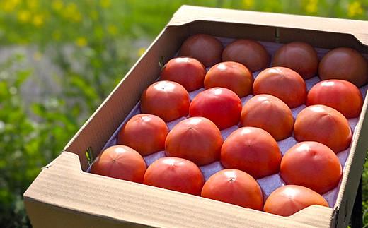【先行受付】【2021年12月以降発送】 野菜 ソムリエ岡田健志郎が育てた トマト 4kg 3回発送 定期便