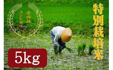 令和3年度 特別栽培米京丹後コシヒカリ 5kg
