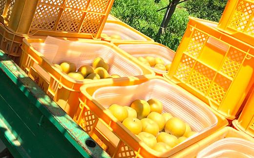 【先行予約】【9月頃発送予定】 新高梨 3玉(2.2kg~2.5kg) 梨 果物 フルーツ
