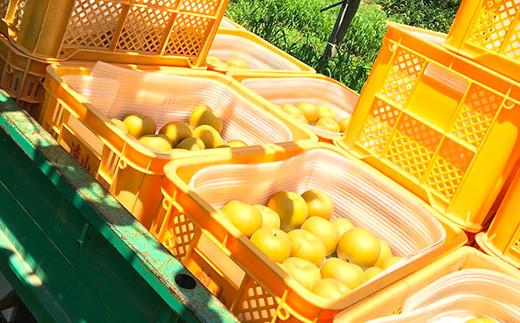 【先行予約】【8月頃発送予定】 秋麗梨 2kg前後(5~6玉) 梨 果物 フルーツ