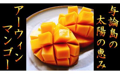 【2021年発送】南の島ヨロンからお届け!田畑農園の完熟マンゴー1.0kg(2~3個)【先行予約】