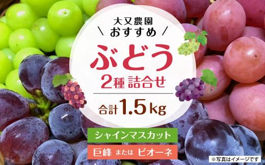 大又農園 おすすめ ブドウ 2種 詰め合わせ 1.5kg 【40pt】