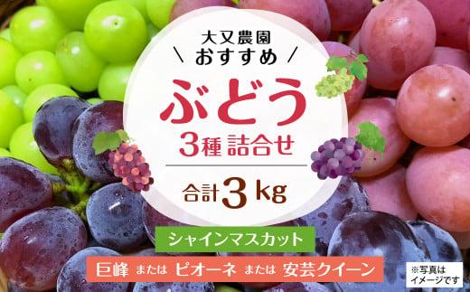 大又農園 おすすめ ブドウ 3種 詰め合わせ 3kg 【80pt】