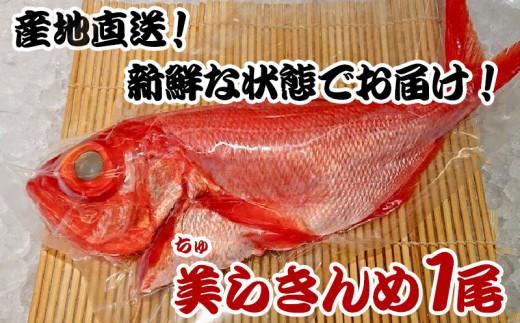 【産地直送】漁師のまちから新鮮な状態でお届け!「美らきんめ」1尾