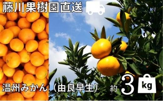 [№5850-0744]農園直送 髙糖度温州みかん(由良早生)約3kg