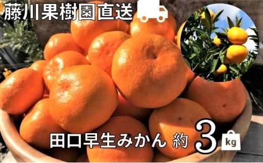 [№5850-0745]農園直送 田口早生みかん 約3kg