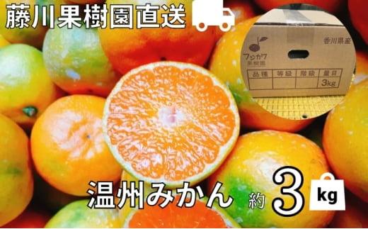 [№5850-0743]農園直送 フジカワ果樹園栽培の 温州みかん 約3kg