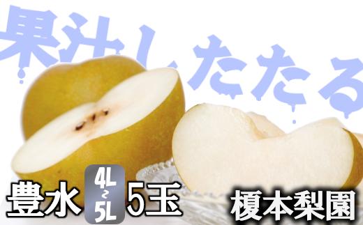 果汁したたる榎本梨園自慢の完熟梨 豊水5玉(4L~5L) 【11246-0144】