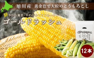 【先行予約】黄金色で大粒 ゴールドラッシュ 12本(8月下旬~発送開始予定)