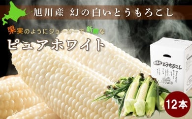 【先行予約】白いとうもろこしピュアホワイト 12本(8月下旬~発送開始予定)